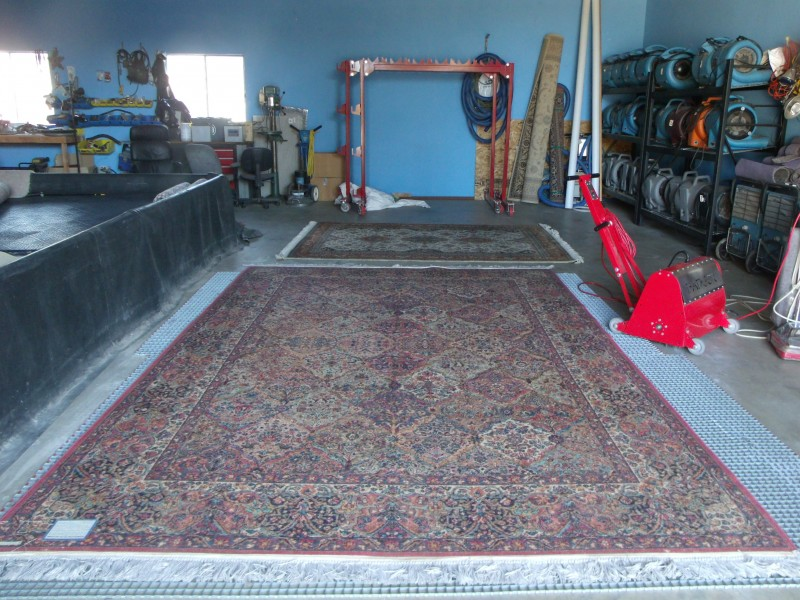 pet urine treatment oriental rug cleaning