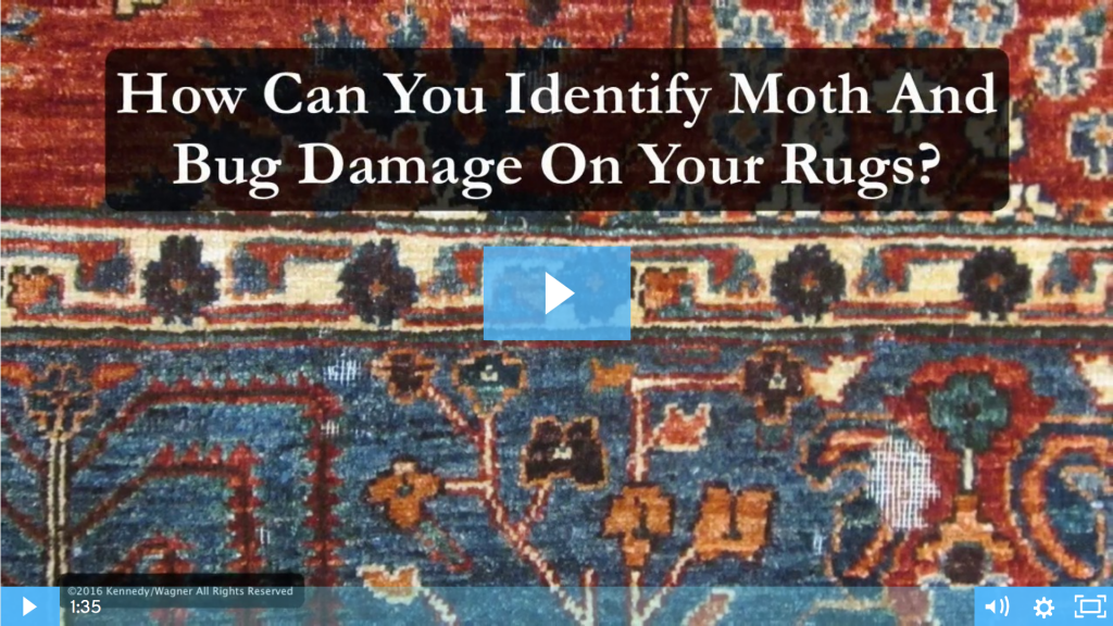 02Identifymothdamage-1024x576 Rug Videos